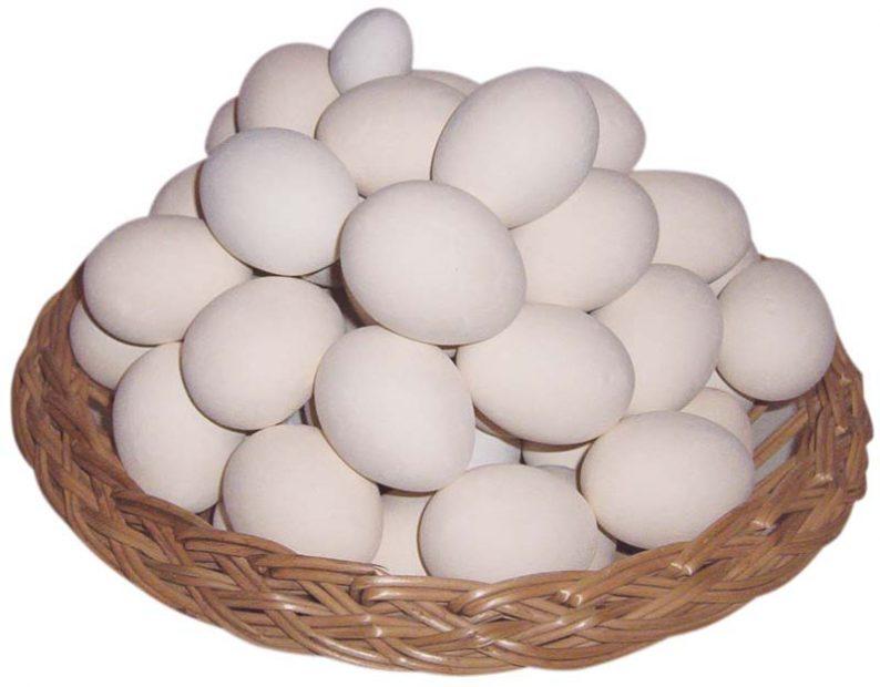 Benefícios do Ovo e a Sua Importância na Alimentação