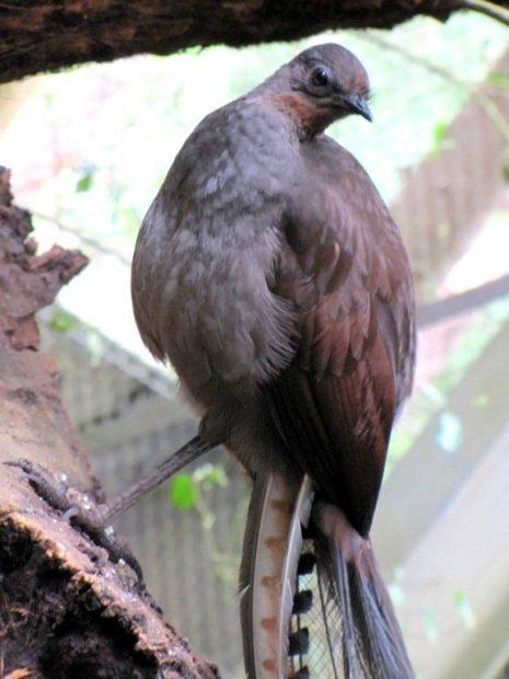 Este pássaro imitou alguns sons que as pessoas estavam fazendo. É um tanto surpreendente e perturbador.