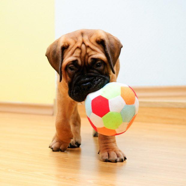 5 Coisas Que Você Pode Fazer Para Deixar o Seu Cão Feliz