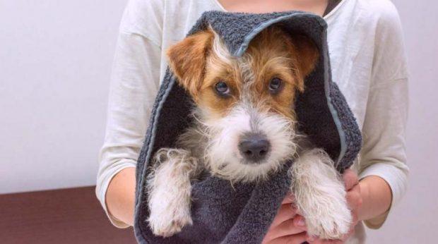 Curso de Agente de Higiene e Beleza Animal do Senac – Como se inscrever