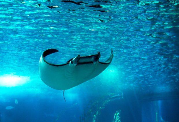 7 imagens para pensar 2 vezes antes de nadar nesse verão