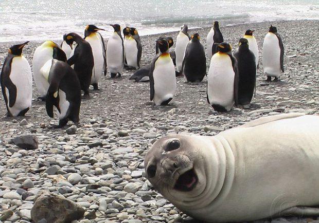 Foca tira uma selfie com pinguins