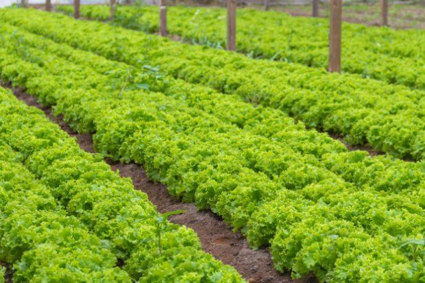 Isenção do ICMS? Consumidor continua pagando o mesmo preço por hortaliças embaladas