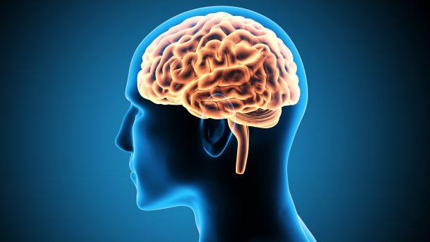 Saiba por que a obesidade influencia no tamanho do cérebro