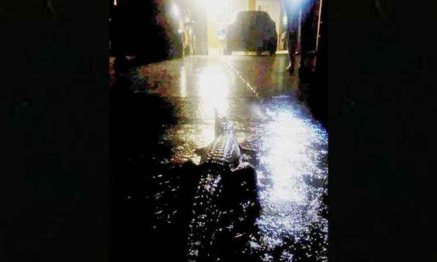 Chuvas causam grandes inundações na Austrália e arrastam até crocodilos para as ruas