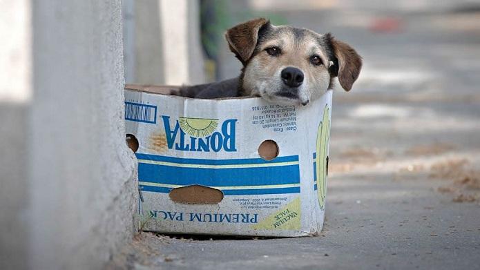 Senado aprova projeto que penaliza maus-tratos a cães e gatos
