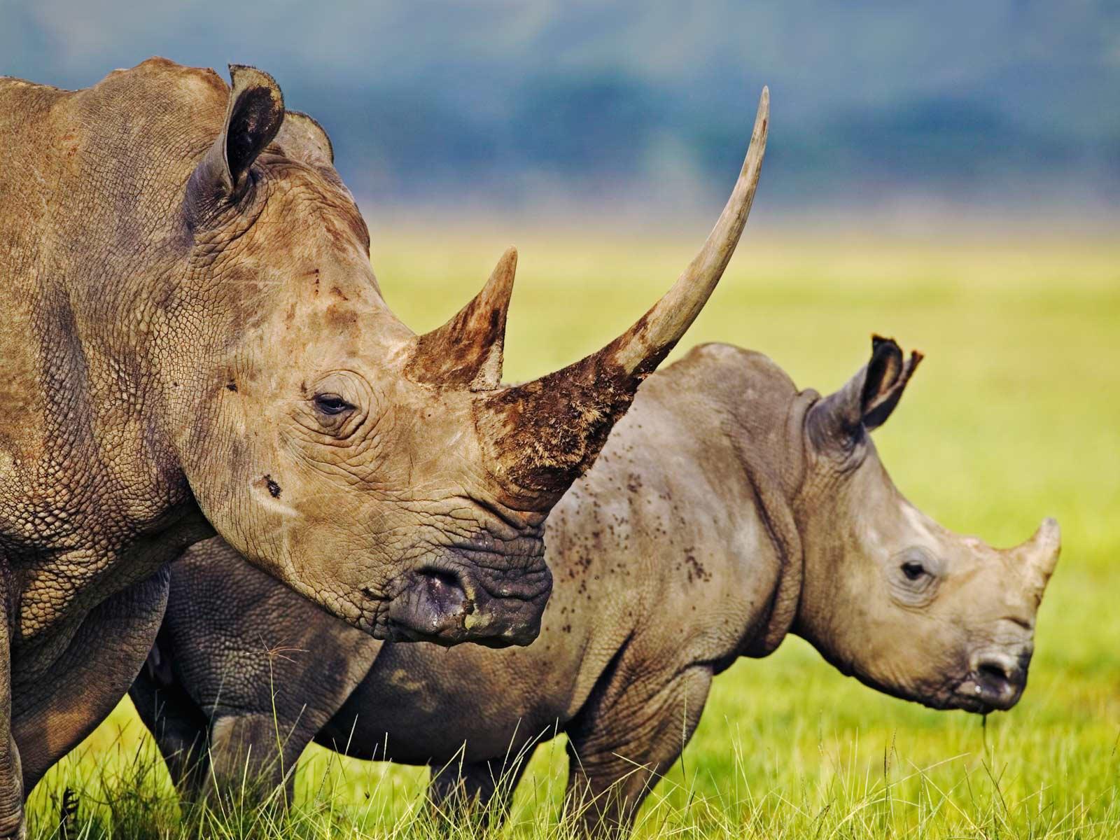 Relatório da WWF mostra 'declínio desastroso' do meio ambiente