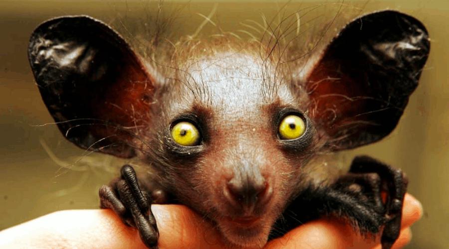 35 animais estranhos e desconhecidos