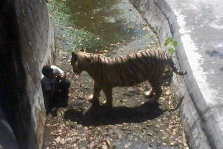 13 ataques assustadores em zoológicos